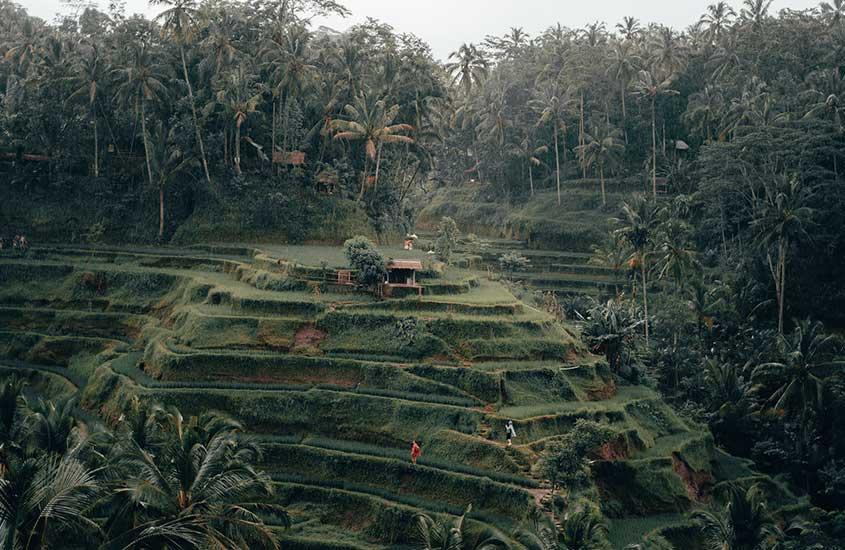 Vista aérea de pessoas em montanha rodeada de árvores em Bali