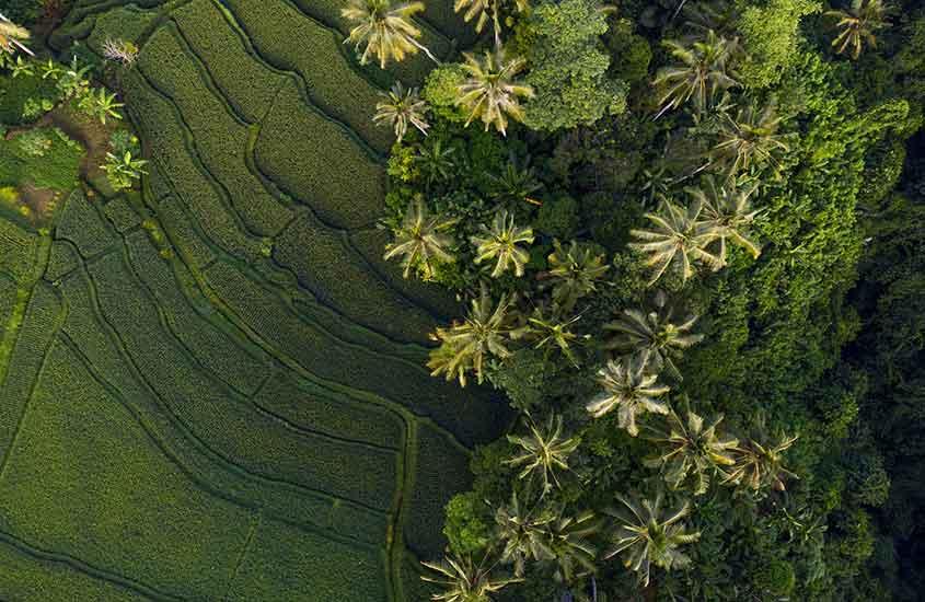 Vista área de vegetação de Bali