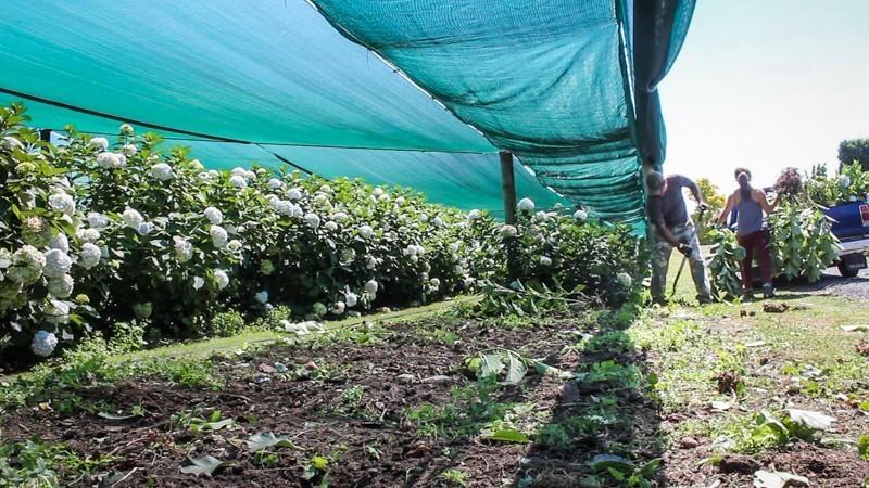 Homem cava terra, durante o dia, enquanto mulher ao seu lado coloca plantas e flores em um carro, em colheita de flores, uma das opções para quem busca emprego na Nova Zelândia