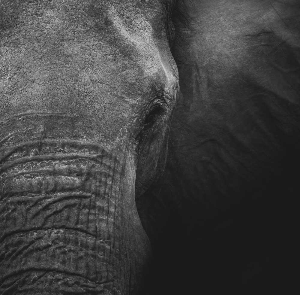 elefante em santuário animal