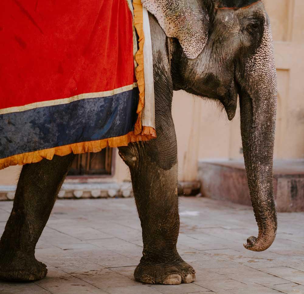 pano vermelho, azul, amarelo e branco em cima de elefante