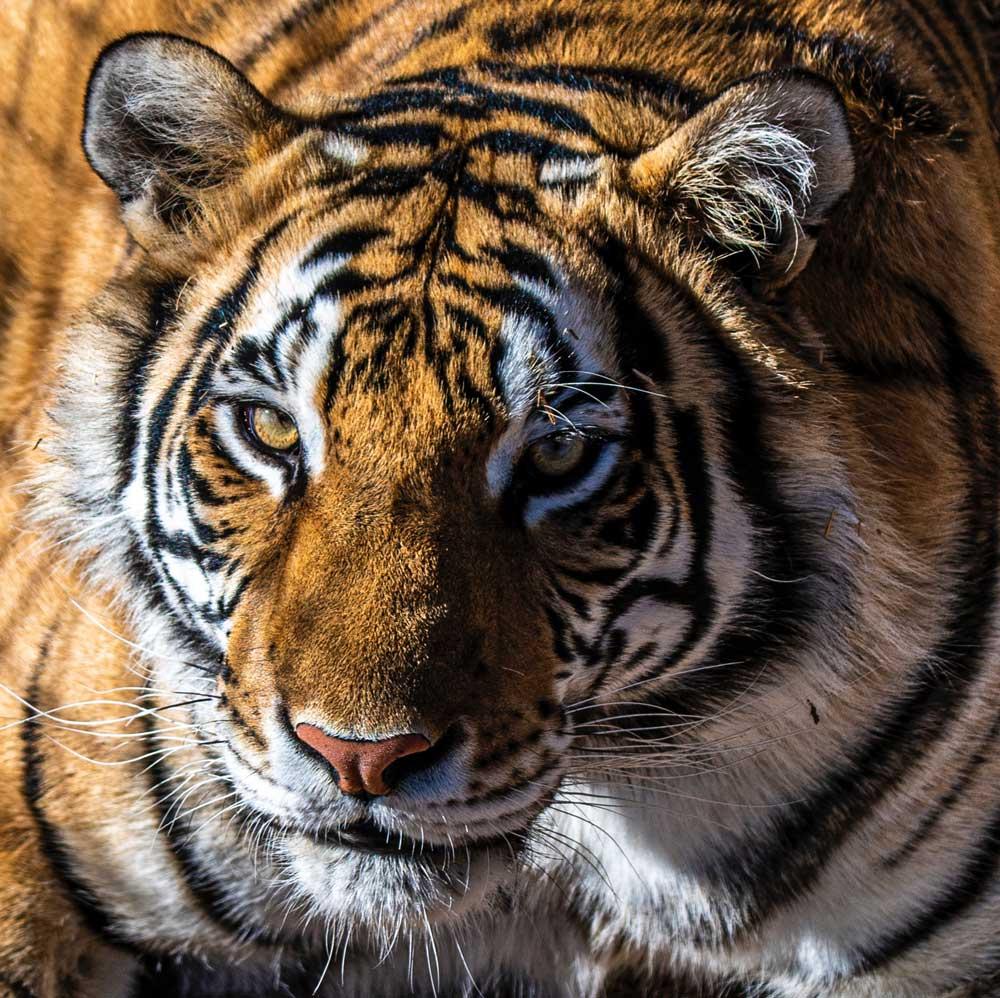 Santuario animal: conheça 9 maravilhosos para visitar ao redor do mundo