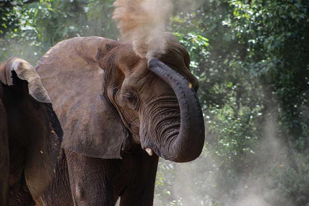 elefante em Elefantes Brasil, um santuário animal no Brasil