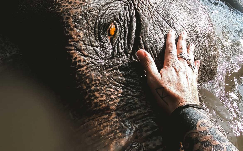 Santuário animal: conheça 9 maravilhosos ao redor do mundo