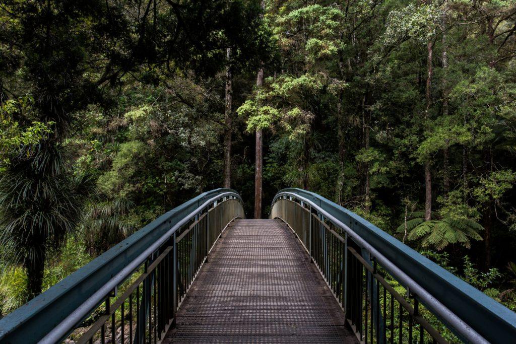 Ponte em floresta, local onde não existem cobras ou animais venenosos no país, mais uma das curiosidades da Nova Zelândia