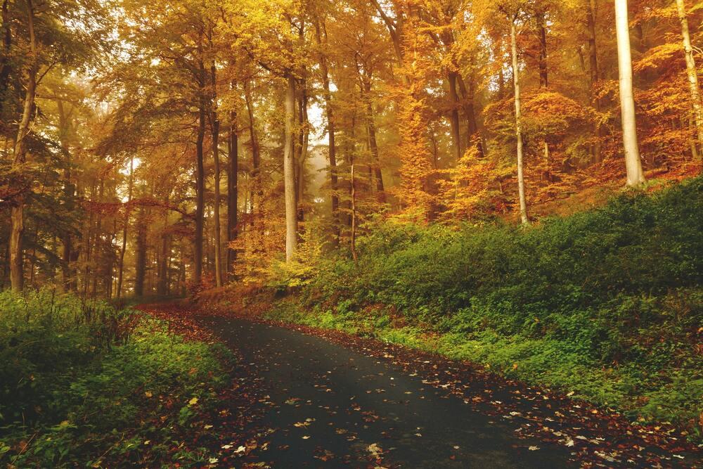 Árvores em floresta. Uma das curiosidades da Nova Zelândia mais interessantes: o país tem muita área verde