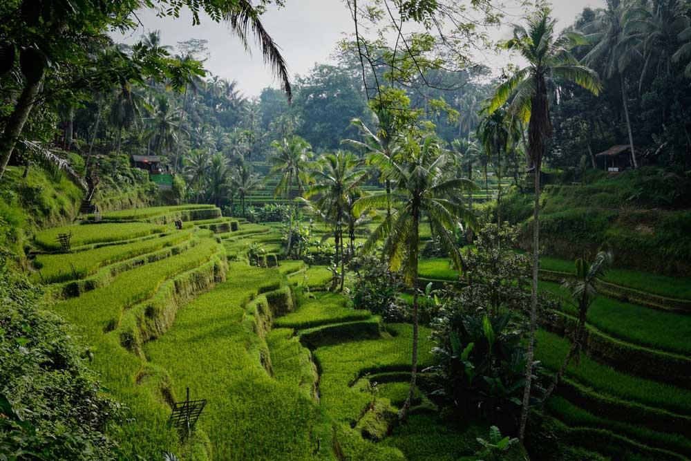 árvores e plantas em Munduk