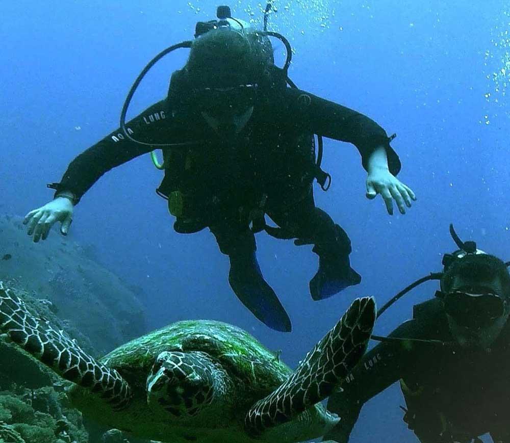viajantes nadam ao lado de tartaruga