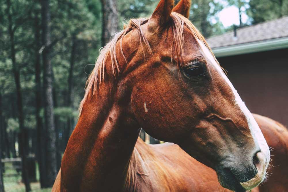 Cavalo marrom em fazenda em Visconde de Mauá