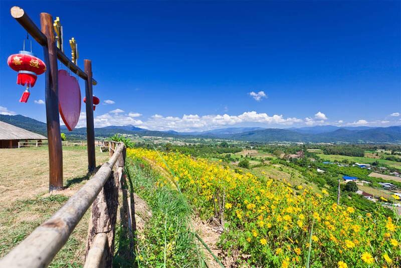Campo florido com flores amarelas sob o céu azul, durante o dia, em Pai uma cidadezinha no norte da Tailândia