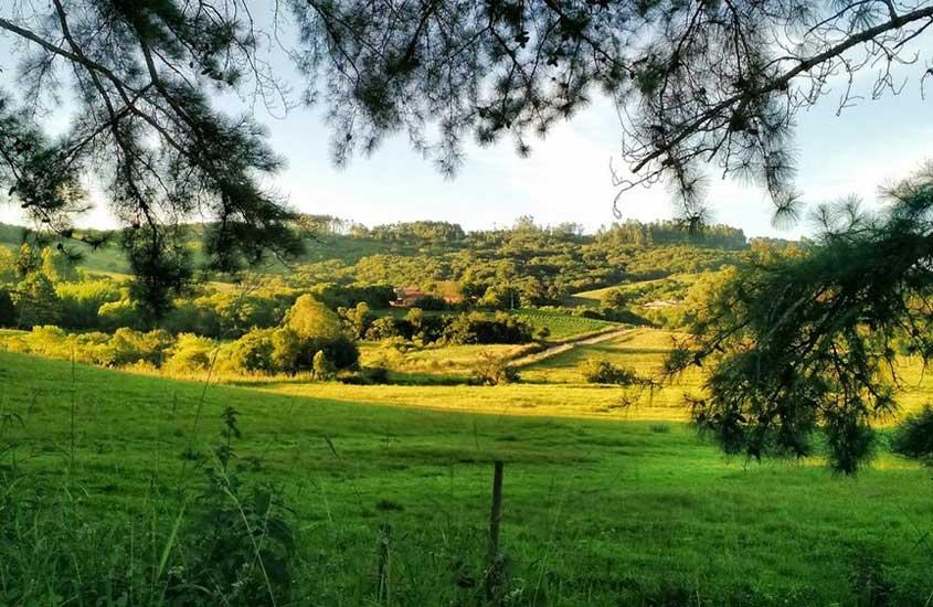 Área verde arborizada durante o dia, em Pelotas, opção para quem busca onde ir no Rio Grande do Sul