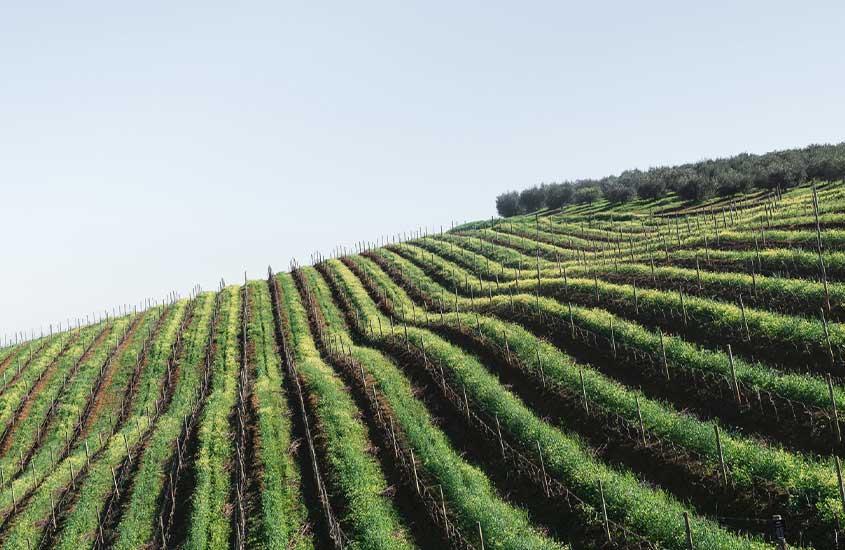 vinícola em Rota 62, uma das curiosidades da África do Sul é que ela abriga a rota do vinho mais longa do mundo