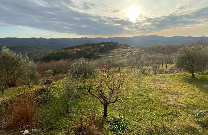 arvores e plantas em campo da Croácia