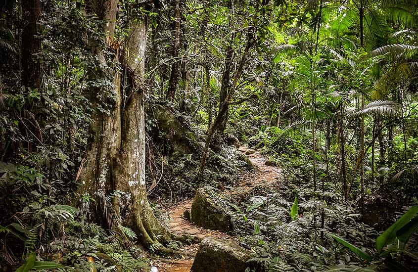 árvores e plantas em trilha para Praia do Sono