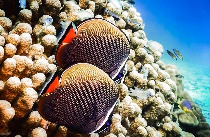 peixes em mar da Tailândia, um dos melhores lugares para mergulhar no mundo