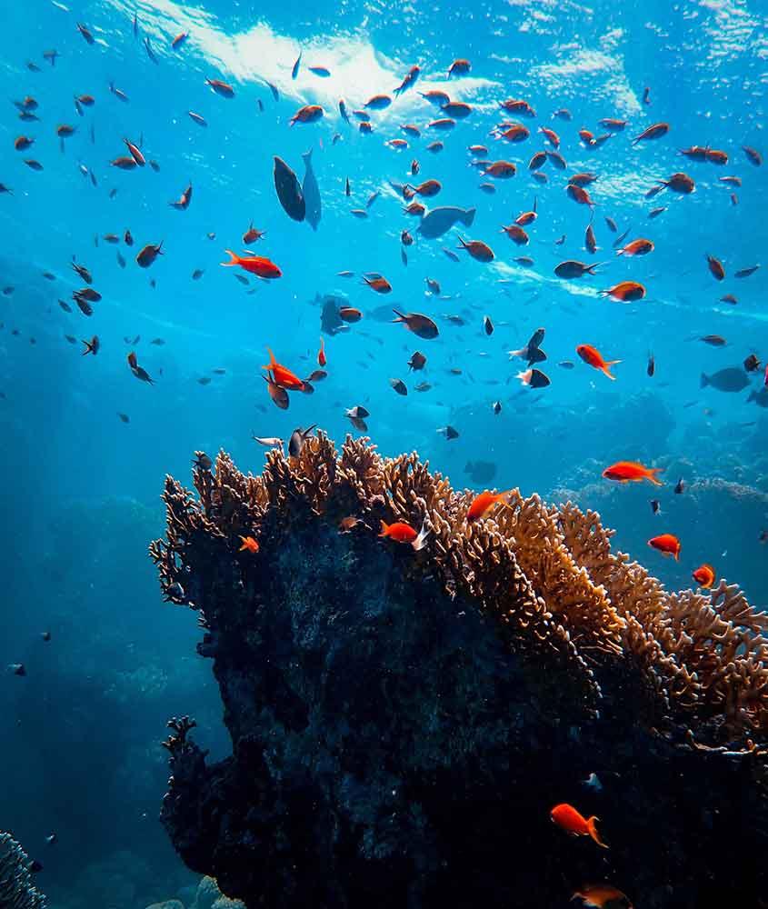 cardume de peixes em Mar Vermelho Egípcio
