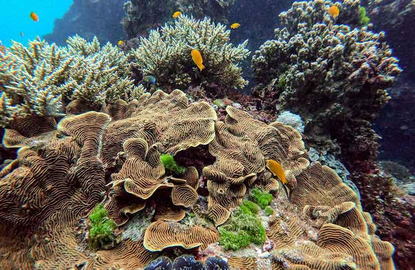 peixes em Grande Barreira de Corais, o recife mais longo do mundo que é um dos melhores lugares para mergulhar no mundo