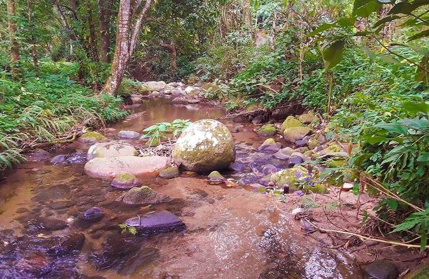 cachoeira cercada de árvores, uma opção para quem busca o que fazer em Vargem Grande rj