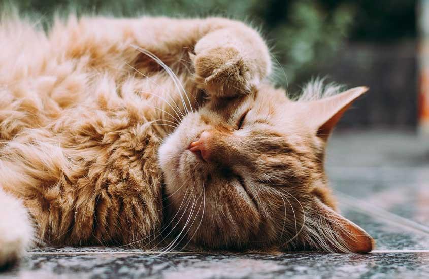 Gato laranja dormindo em rua, uma das curiosidades sobre o marrocos é que há gatos por toda parte