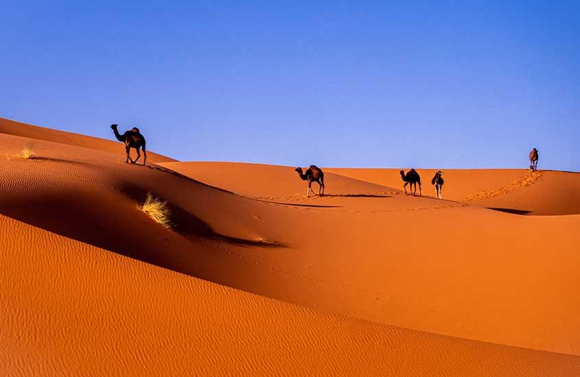 camelos caminhando em deserto do Saara, uma das curiosidades sobre o Marrocos é que o país abriga o maior deserto quente do mundo