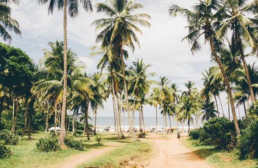coqueiros em Praia em Itacaré, um dos lugares baratos para viajar na bahia