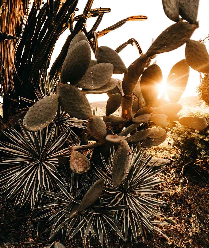 plantas em acostamento em Macacos MG
