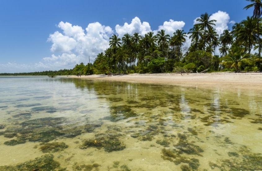 mar, areia e coqueiros em Praia da Ponta dos Castelhanos, uma opção para quem busca o que fazer em Boipeba