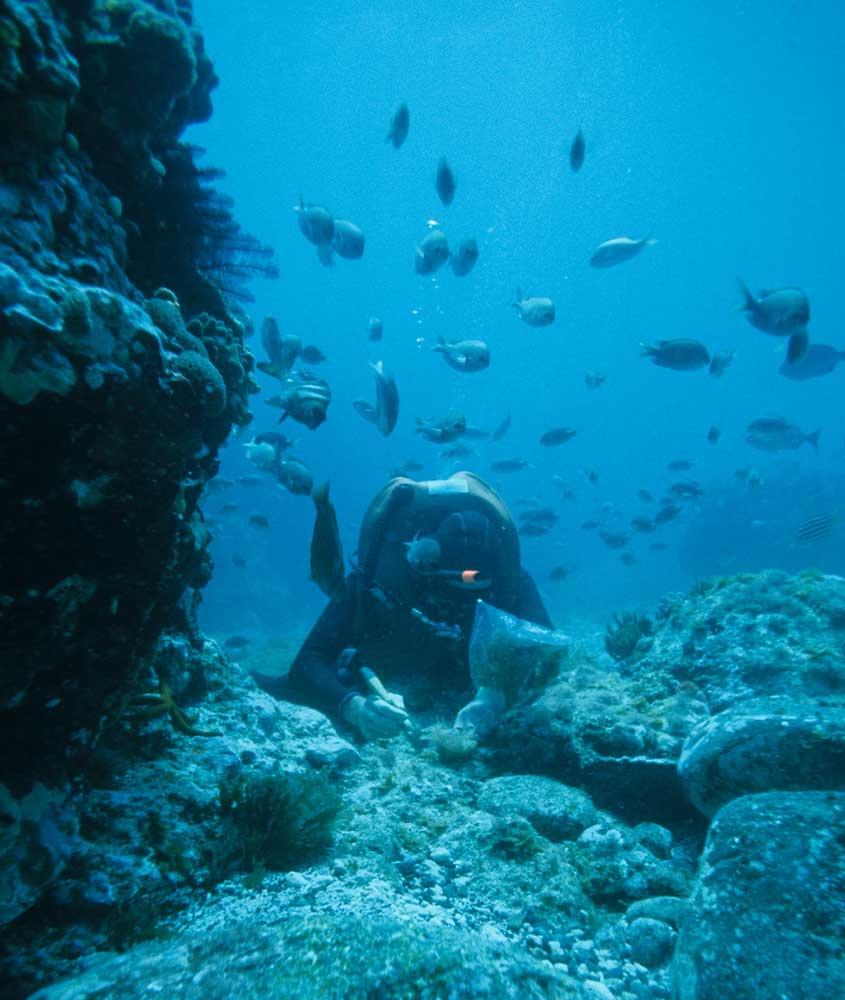 mergulhador rodeado de peixes em mar de morro de sao paulo