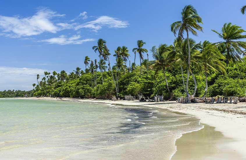 mar e coqueiros de Quinta Praia, em morro de Sao Paulo