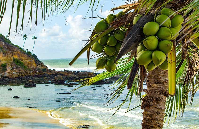 coqueiro e mar de Primeira Praia, um bom lugar para visitar por quem busca o que fazer em morro de são Paulo