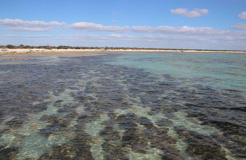 águas cristalinas de mar de Shark Bay, uma das praias da África do Sul
