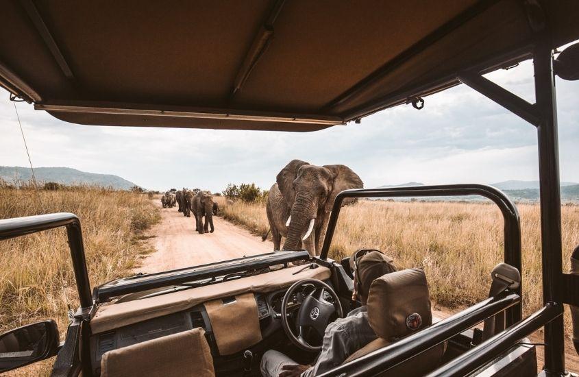 elefantes caminham ao lado de 4x4, onde há um viajante durante um safári na Africa