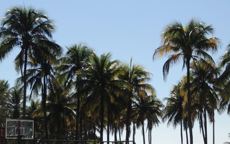15 parques no Rio de Janeiro que você precisa conhecer